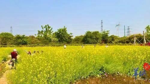 【美景】黄叶与红花,争闹广州春
