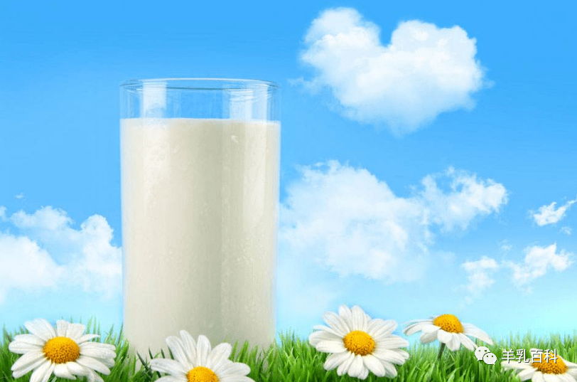羊奶接近母乳的几大依据