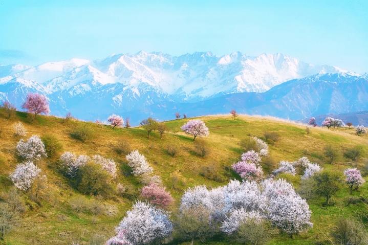 季节限定,春天拍花,不看就遗憾的摄影线路推荐!