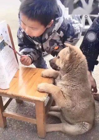 一个敢教一个敢学,狗子一脸生无可恋
