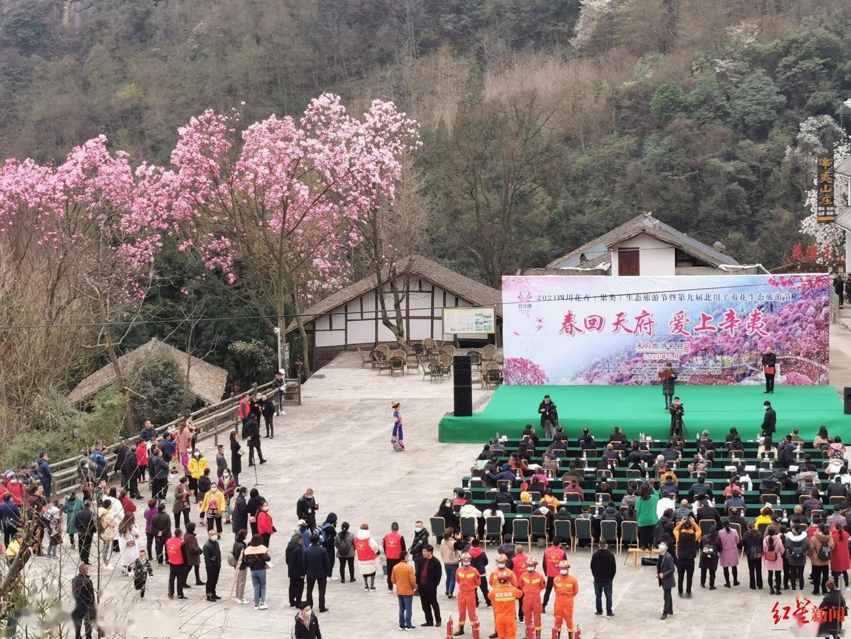 花花花花,漫山遍野开啦!北川辛夷花生态旅游节在九皇山开幕