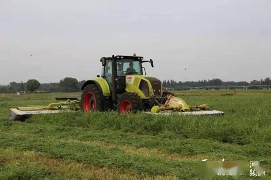廊坊远村现代农业园区:打造健康休闲农业基地