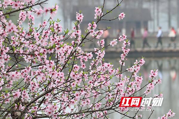 【图】雁峰区:踏青赏花享春光