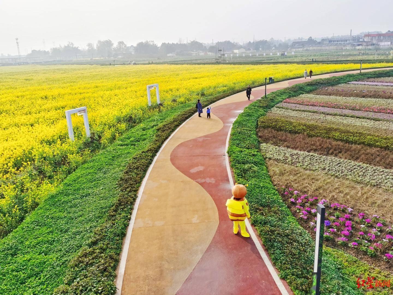 首届天府田园油菜花节开幕,这些赏花点位别错过