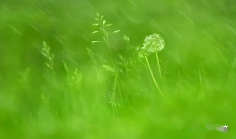 樱花动漫:不同的花有不同的花语,同是芍药,不同的文人从中悟出了不同的道 网络快讯 第2张