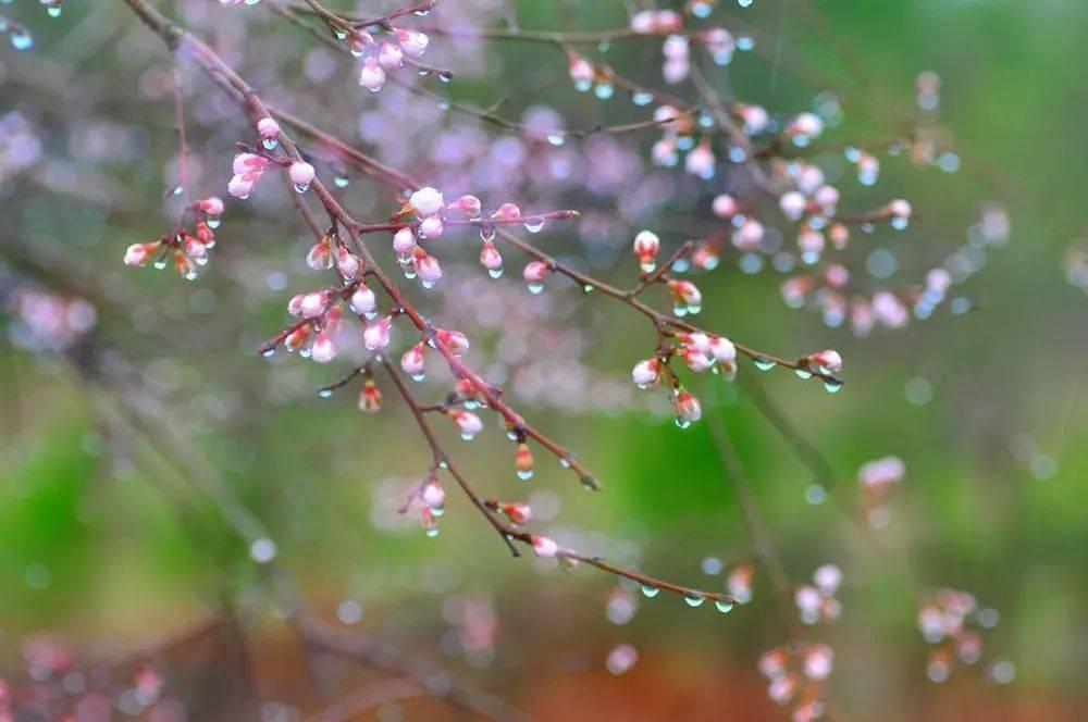 樱花动漫:你叫醒了春天的所有感觉 网络快讯 第4张