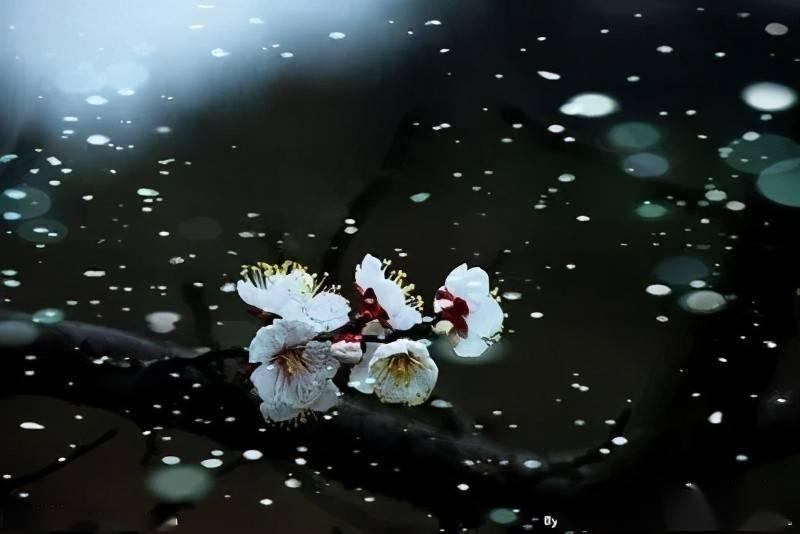 wps下一页:在这个杏花雪白的春天,我相信了神女也会死去 网络快讯 第1张