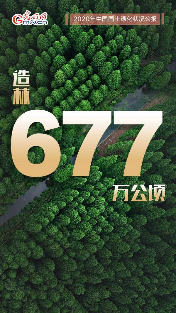 """海神節海報   2020年中國國土綠化""""成績單""""請查收!"""