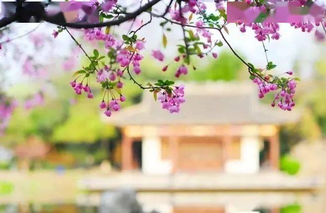 wps下一页:三月桃花开,春天按时来 网络快讯 第8张