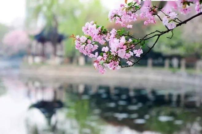 wps下一页:三月桃花开,春天按时来 网络快讯 第5张