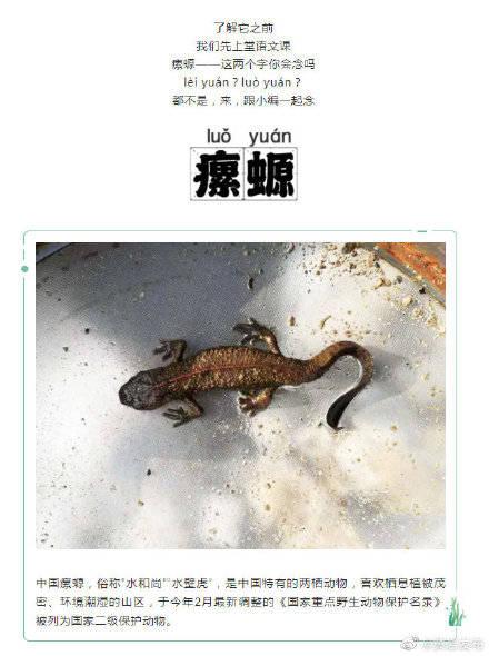 黄岩首次发现国家二级保护动物瘰螈