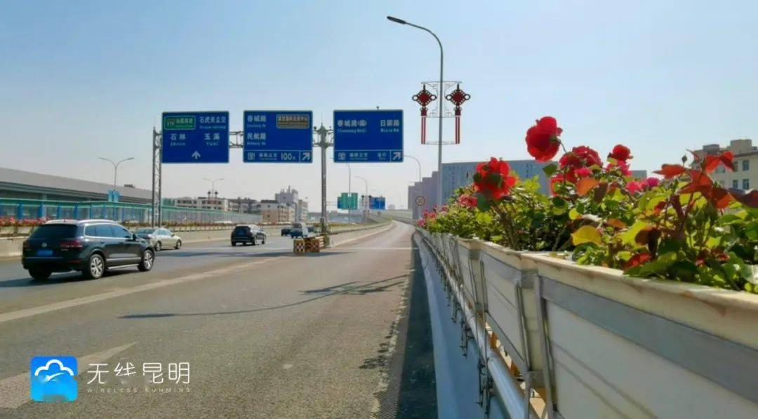 """@昆明人 开车都是""""花路"""" 南二环沿线4月底呈现""""十里花海"""""""