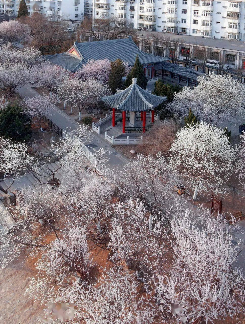 中国34个极致的春天,你去过几个?