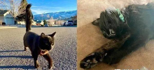 吉普车里突然窜出橘猫,全程贴肩膀监督,他傻眼:我没养猫啊!