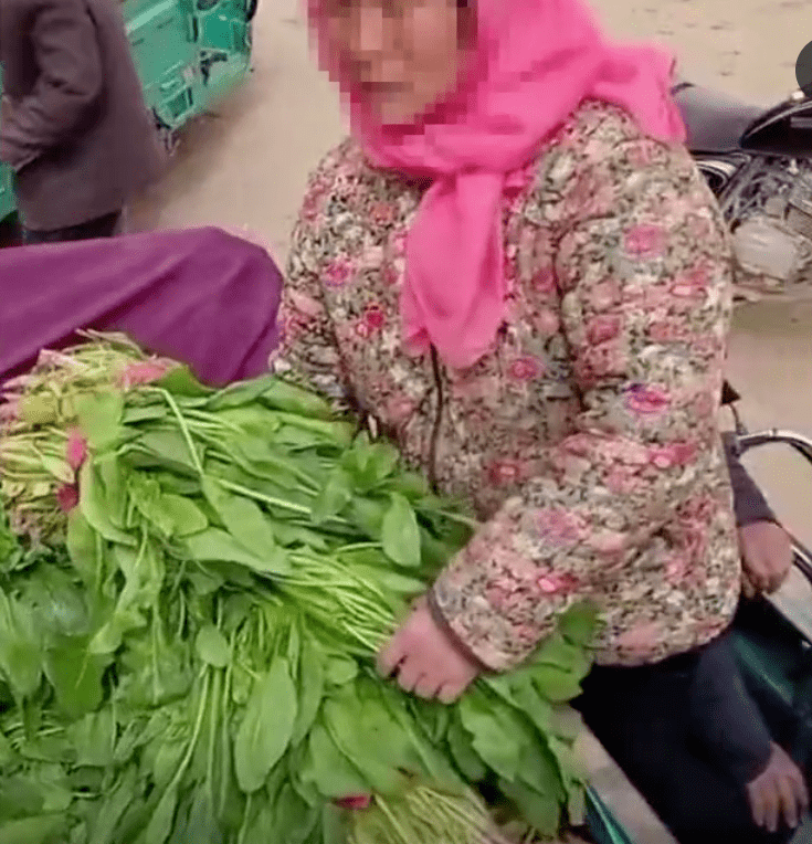 农民卖菠菜,1300斤15元,菜贩:行情就这样,没办法  第1张
