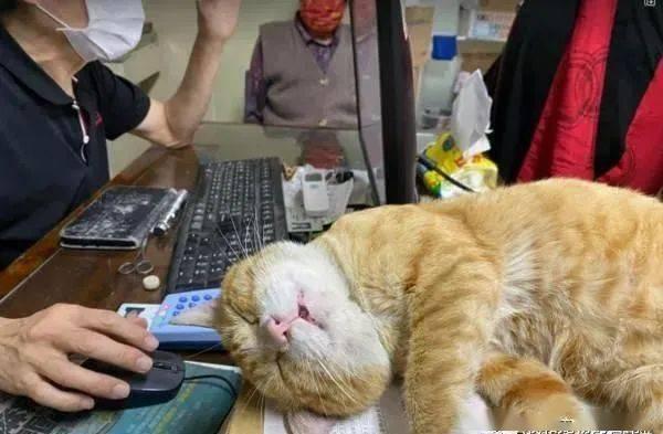 陪诊喵护士累倒在办公桌:医生您先看诊,本宫累了......