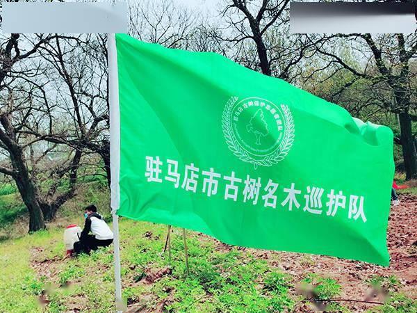 全民参与古树复壮 共同守护绿色家园 驻马店第二次古树复壮公益活动
