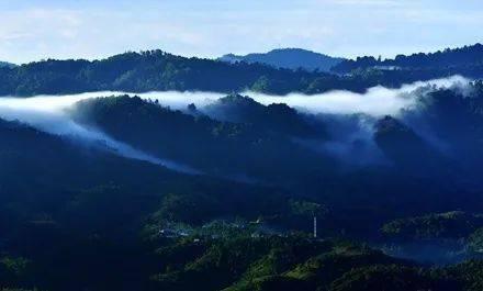 追逐暴利终将受罚,毁林种茶必须付出代价——勐海县毁林种茶违法人员的忏悔