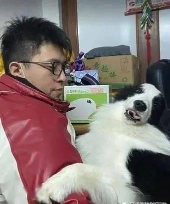 准备出门上班却被狗掌挡门,结果在家门口上演了一场真狗版的宫斗剧!