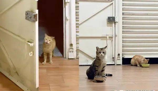 流浪猫尾随着屋主一起回家,屋主的做法令人大赞!