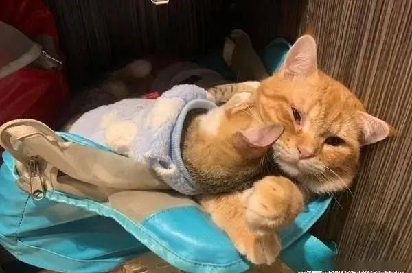 橘猫吞掉一大坨卫生纸,当场噎到干呕吐不出来,送去急诊才...
