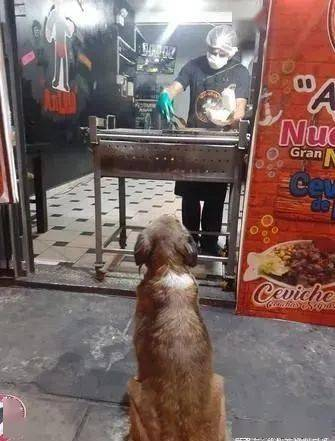 烤肉店老板热情喂流浪犬,没想到这件善行一做就是5年!