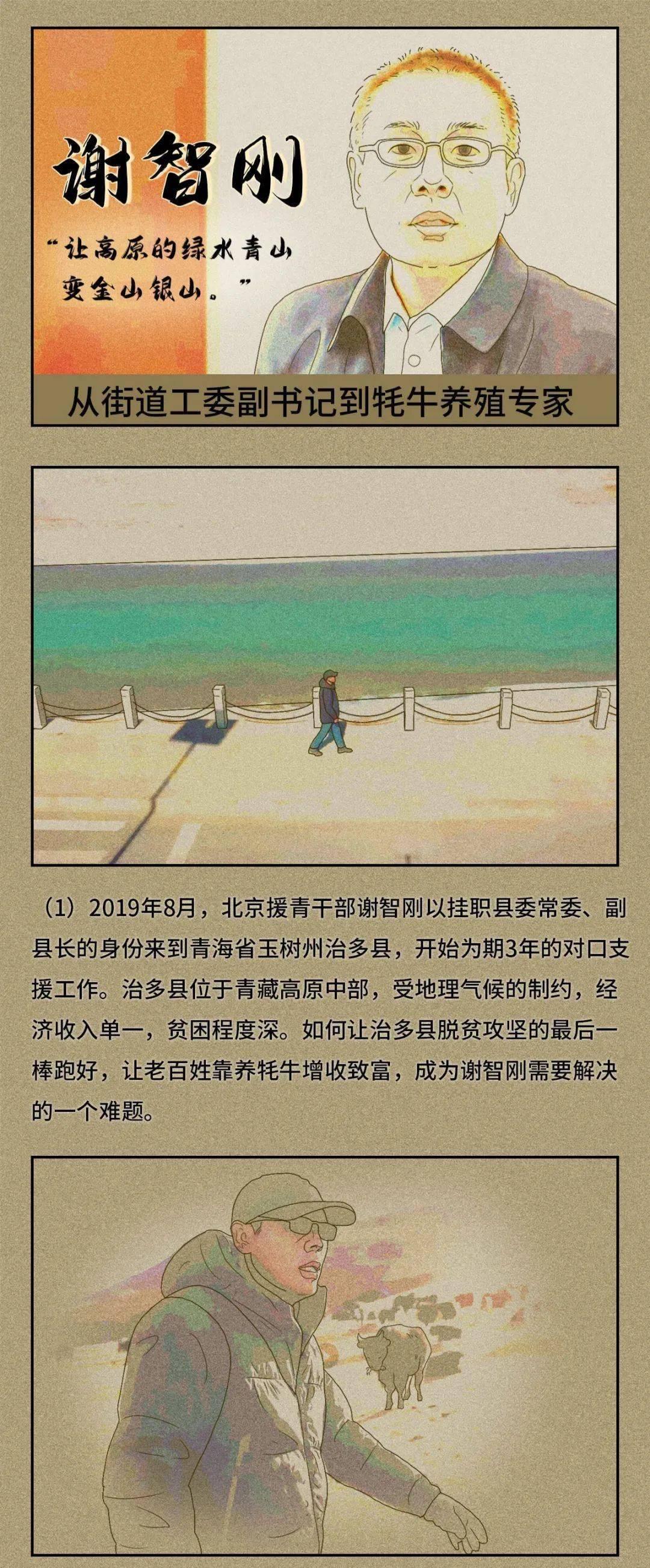 """从街道工委副书记到牦牛养殖专家@谢智刚   """"画""""说身边的党员"""