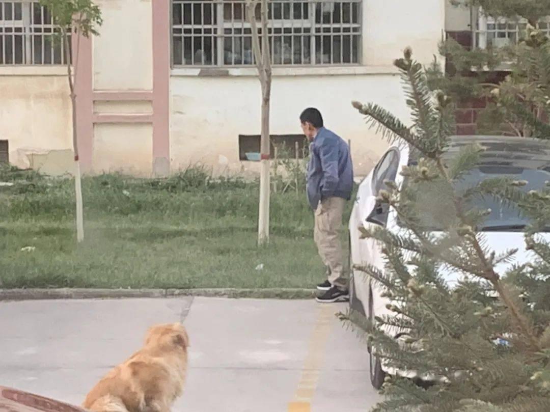 狗栓绳子趴地上不走 戴着狗项圈在地上爬