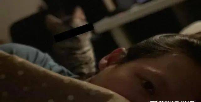 赖床装睡遭爱猫狂盯20分钟,奴才:我当时害怕极了!