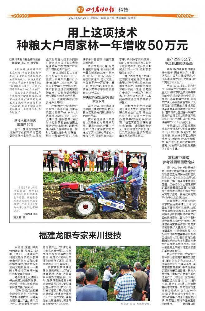 亩产259.3公斤 中江县油菜创新高