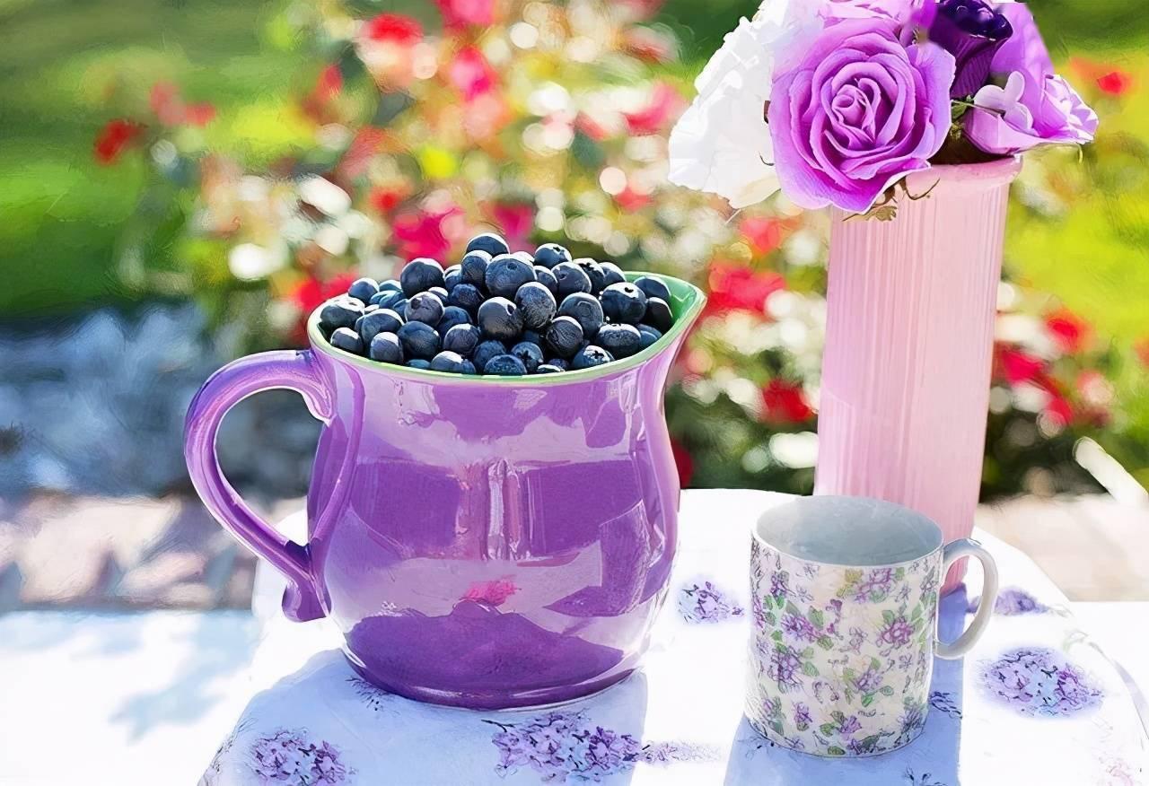 蓝莓的纵意人生小说 蓝莓的纵欲人生免费阅读