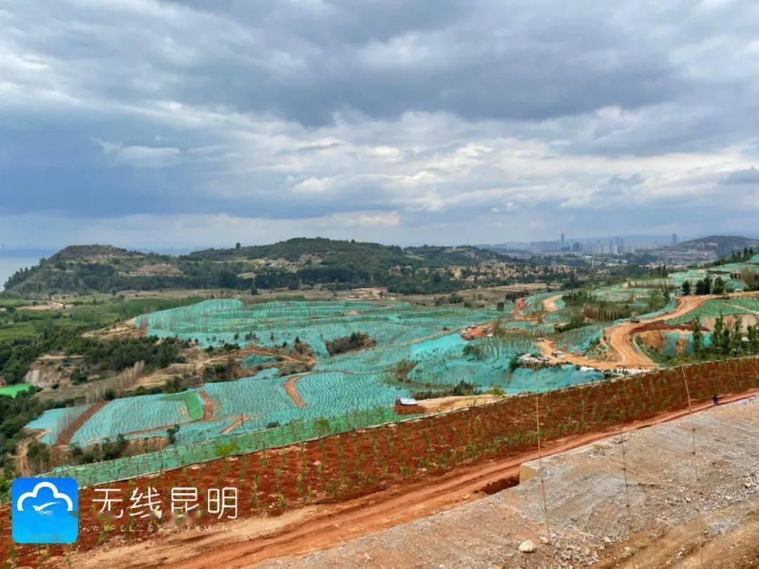 全拆!9月底前完成长腰山滇池一级保护区复绿工作