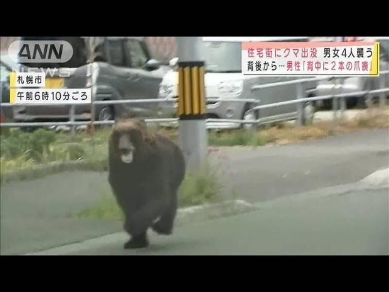 日本北海道惊现棕熊街头横冲直撞,袭击4人后被射杀