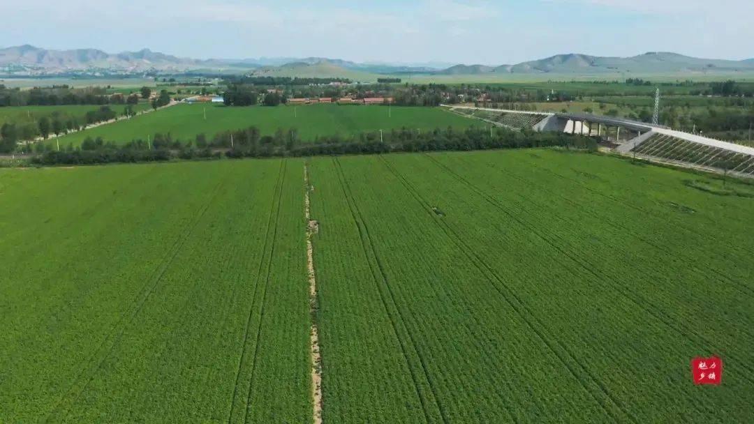 【头条】巴彦塔拉:用生态农牧业扮靓美丽乡村!