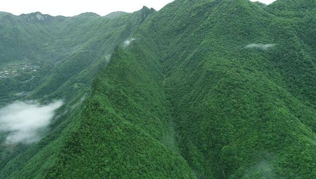 """神农架遗产地""""扩容"""",重庆五里坡列入世界自然遗产"""