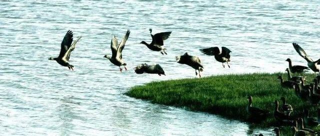 """空中有客来!""""千年鸟道""""又迎候鸟过境"""