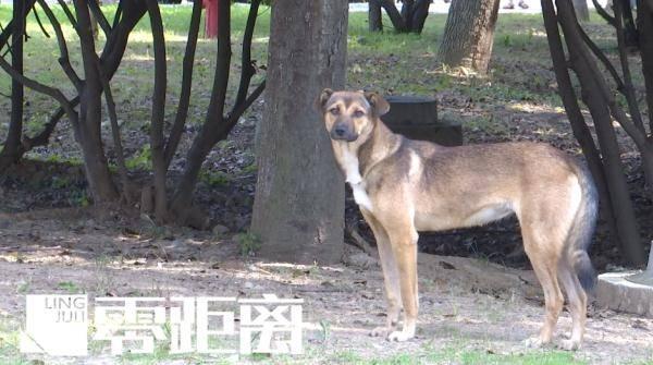 南京一公园内惊现成群流浪狗,体型偏大引发担忧!