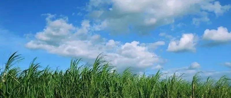 """新河县生态环境执法大队聚焦""""蓝天、碧水、净土、青山""""四大保卫战,多措并举锤炼队伍——打造生态环境保护执法铁军"""