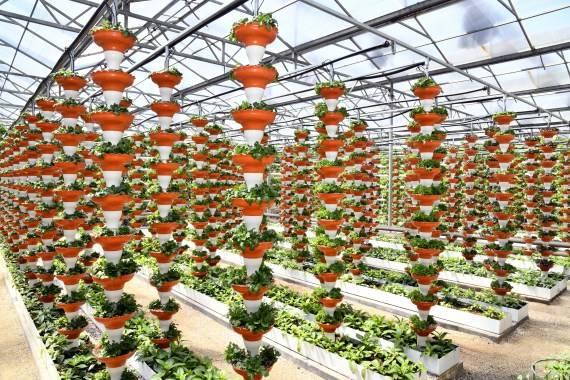 首个农业总产值过万亿元省份是如何炼成的?