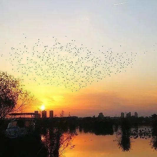 淮阳秋日的美好,浅藏在生活中这些零星的碎片里...