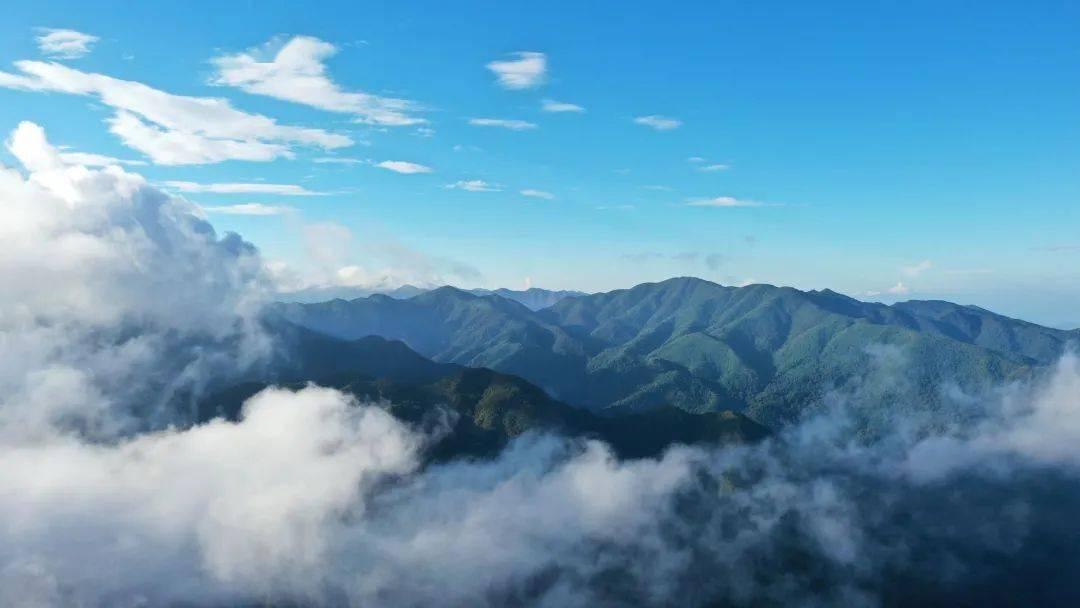 云南哀牢山国家级自然保护区新平段生物多样性保护成效明显